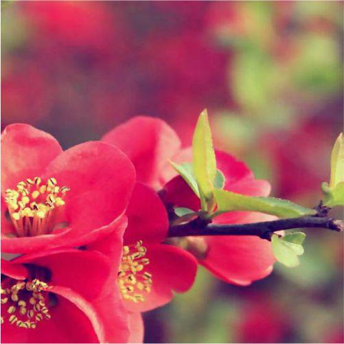Ανθοφόρα πολυετή φυτά
