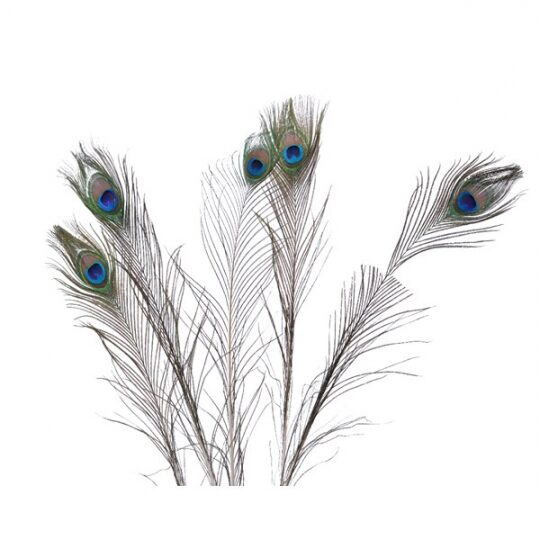 FEATHER001