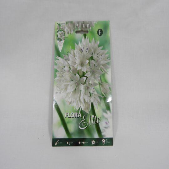 Allium Crace full Beauty 1